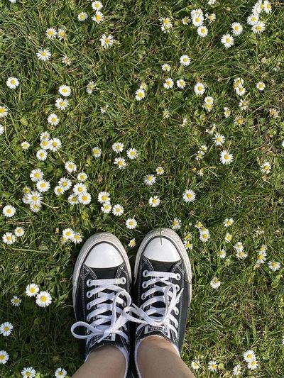 Low section of person standing on grass covered with daisies.