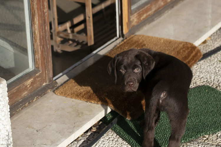 High angle portrait of black dog