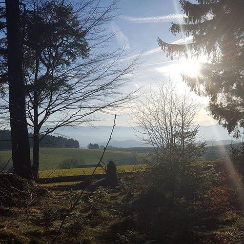 Sun Bluesky Wald Stpeter Greatview