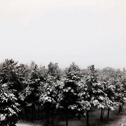 Nature Winter Sky First Eyeem Photo