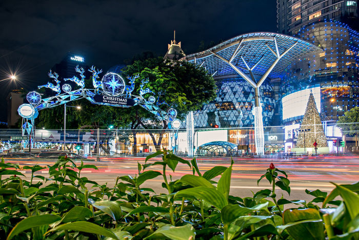 Christmas on a Great Street Christmas lights and decors lights up the famous Orchard road in Singapore Singapore Amazing Architecture Architecture Capitaland Celebration Christmas Christmas Lights Christmas On A Great Street Christmas Tree Decorations 🎭 Green Illuminated Ion Light Night Night Lights Orchard Road Singapore View Singaporestreetphotography Tourist Attraction  Trails Visit Singapore First Eyeem Photo