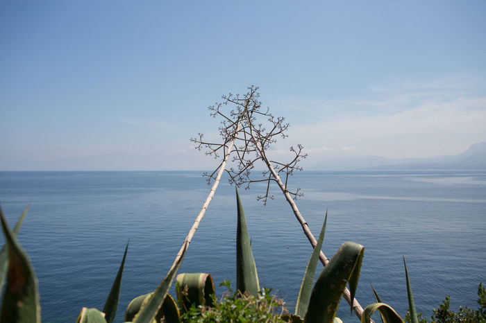 Agave Plant Blue Sea Blue Sky Island Italy Italy Landscape Peaceful Route Secondaire Sea And Sky Seascape Season  Sicily Spring Flowers Summer