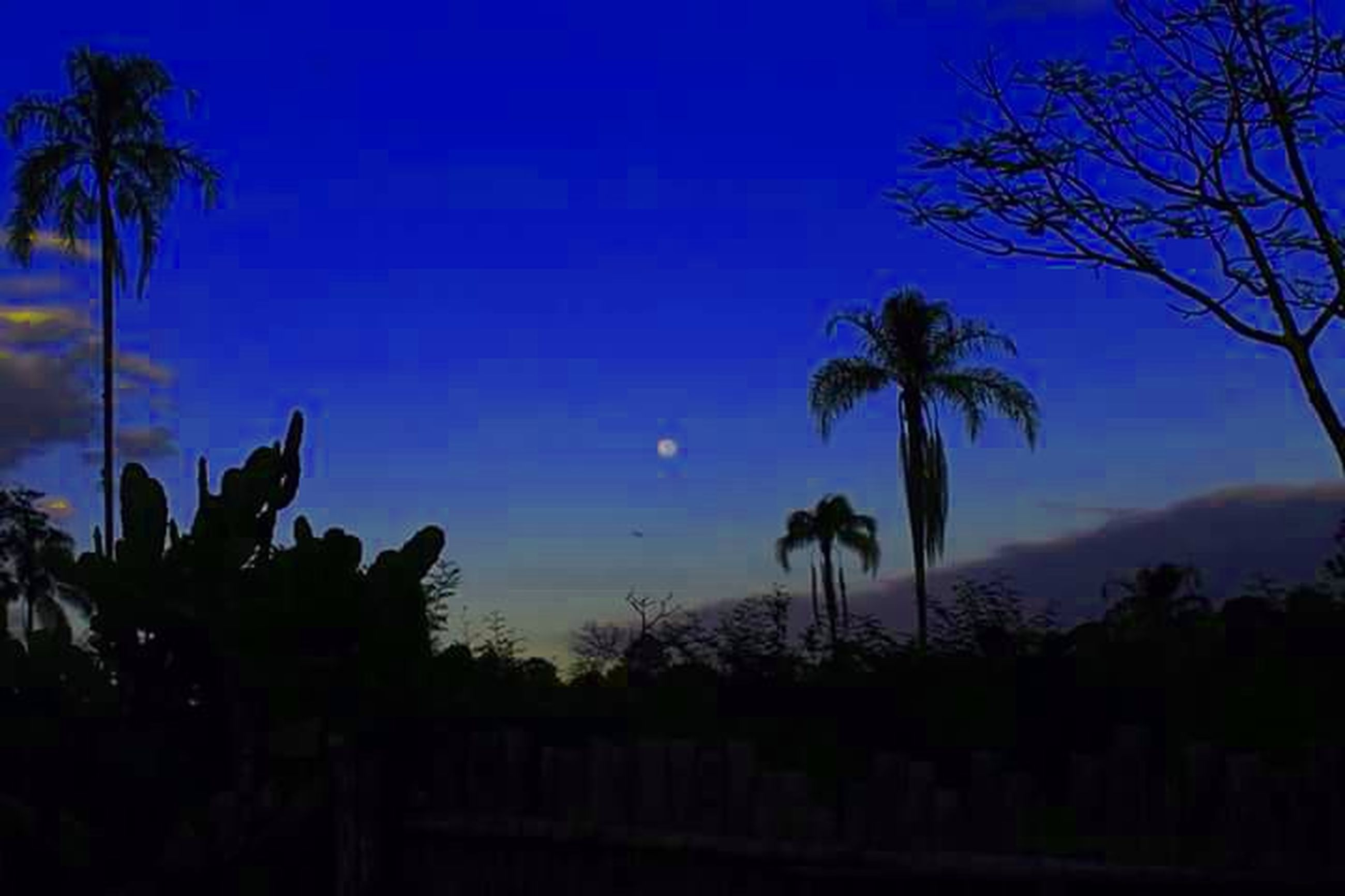palm tree, silhouette, tree, tranquility, tranquil scene, sky, beauty in nature, scenics, sunset, nature, blue, growth, dusk, outline, low angle view, idyllic, tree trunk, outdoors, no people, landscape