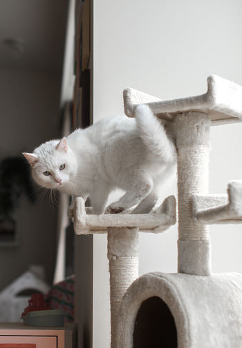 Cat Home Cute Cat Amazing Cat Beautiful Cat Cat Cat House Cat Themes Domestic Domestic Animals Domestic Cat Feline Home Interior Indoors  Looking At Camera Mammal No People One Animal Perfect Cat Pets Portrait Sitting Vertebrate Whisker White Cat White Color