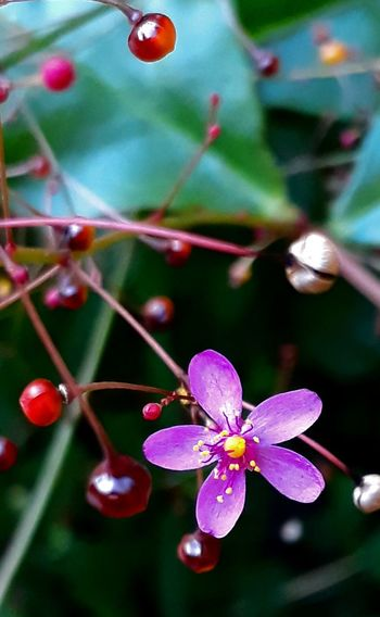 etérea Flower