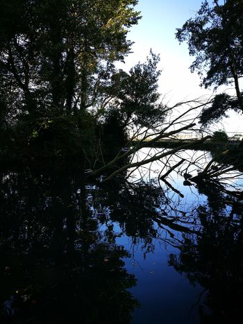 Tree Low Angle View Nature Beauty In Nature No People Outdoors Branch Silhouette Sky Growth Forest Day Pond Hurricaine On The Way Ducks Where The Ducks At? Reflections Mirrors Blue Royal Blue  Something Beautiful Dublin, Ireland St. Annes Park Raheny