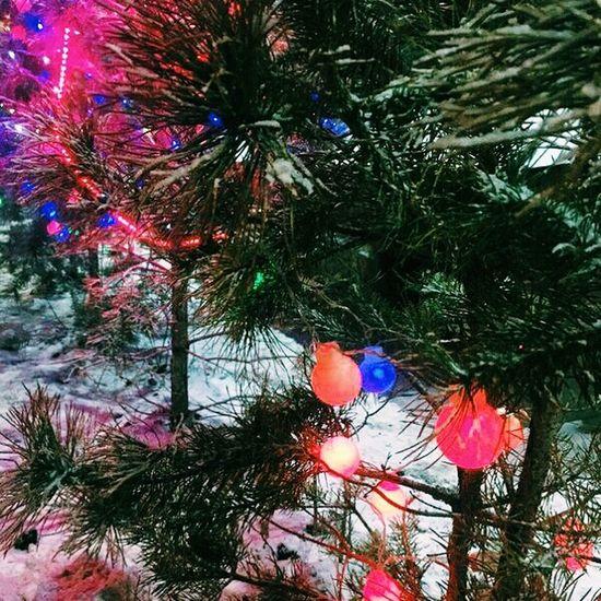 Mywork Tree No People Nature Night Celebration Christmas Tree Christmas