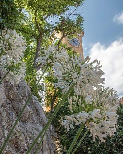 #eze au milieu des #fleurs Flower Head Tree Flower Sky Close-up Plant
