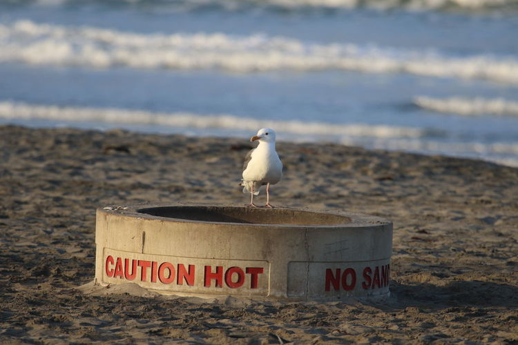 Animal Themes Bird Communication Don´t Care Don´t Panic No Worries One Animal Relax Sand Sea Seagull Shore Text Tranquility Warm Feet Warning Warning Sign Water