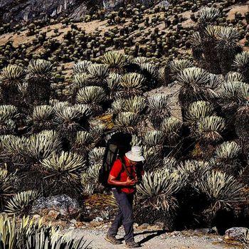 """Caminando entre Frailejones rumbo al valle del pico Piedras Blancas en el sector de Mifafí, en el parque nacional Sierra de la Culata, en Mérida, Venezuela / Walking among """"Frailejones"""" in course to the valley of Piedras Blancas Peak in Mifafí in the Sierra Culata National Park, Mérida , Venezuela Venezuelainsite Venezuelaes Venegramers Venezuela_captures Insta_ve Instavenezuela Ig_merida Ig_southamerica Ig_colombia IG_Venezuela Icu_venezuela Ig_tachira Instafoto_ve Igerssc Picoftheday Elnacionalweb Canon Photojournalism Everydayvenezuela Everydaylatinamerica Everydayeverywhere"""