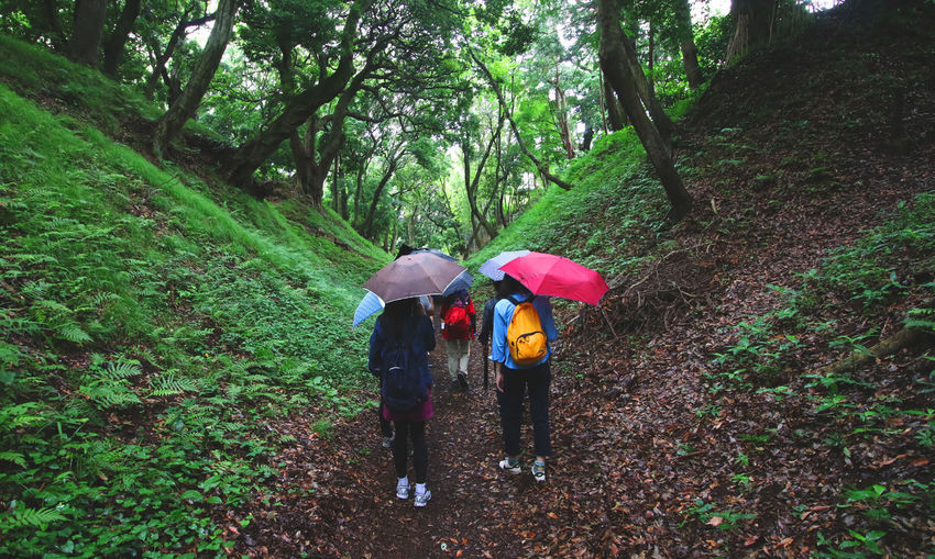 High angle view of people hiking while holding umbrella in rainy season amidst plants