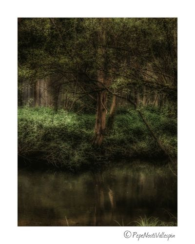 Nature No People Outdoor Photography Nature Photography Pola De Siero Green Nature Riverscape River Rionora