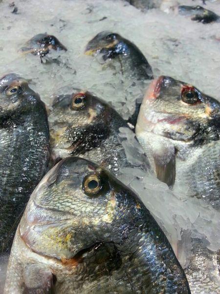 Fish Market ! ●