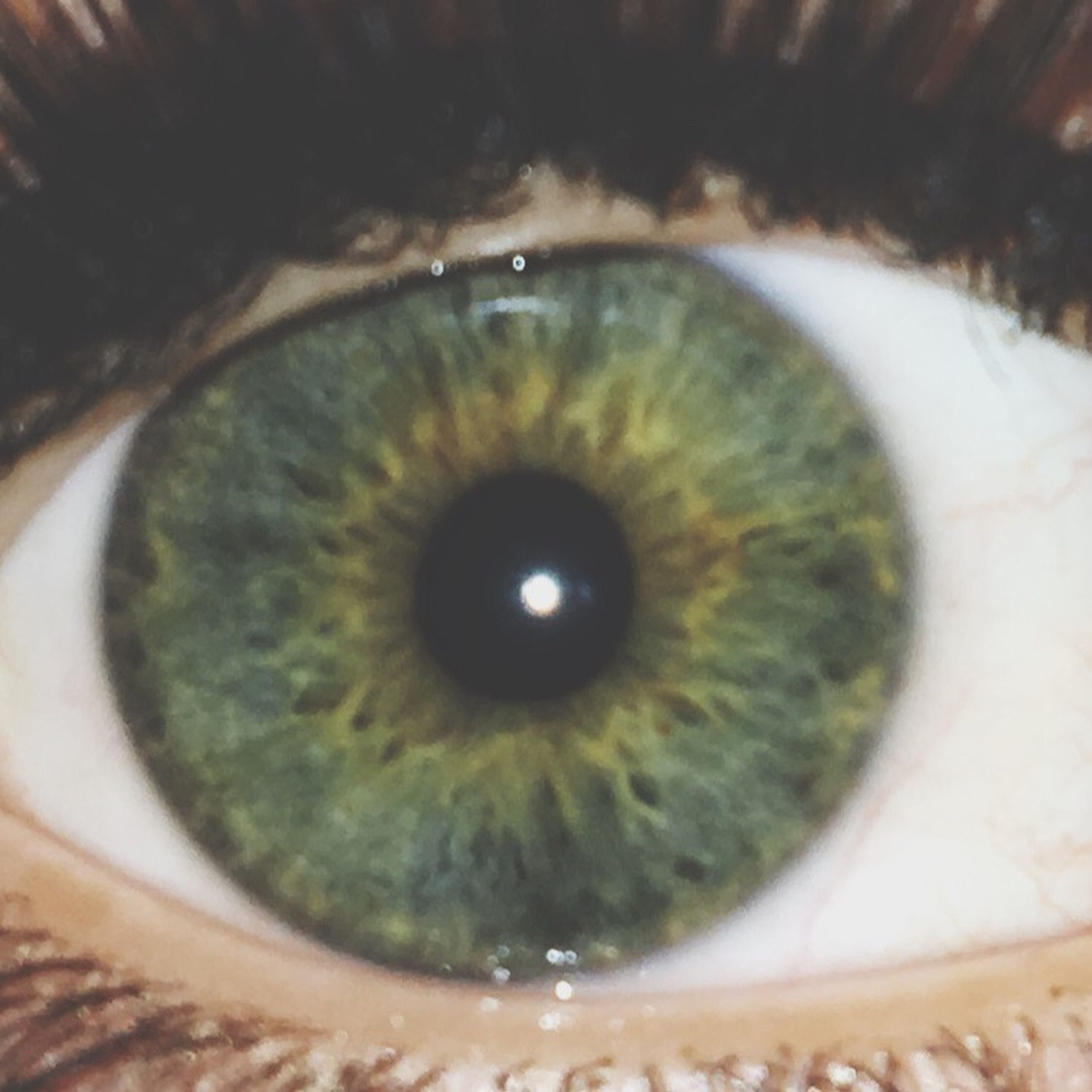 indoors, close-up, circle, human eye, eyesight, sensory perception, extreme close-up, selective focus, eyelash, portrait, part of, looking at camera, unrecognizable person, geometric shape, iris - eye, high angle view, extreme close up