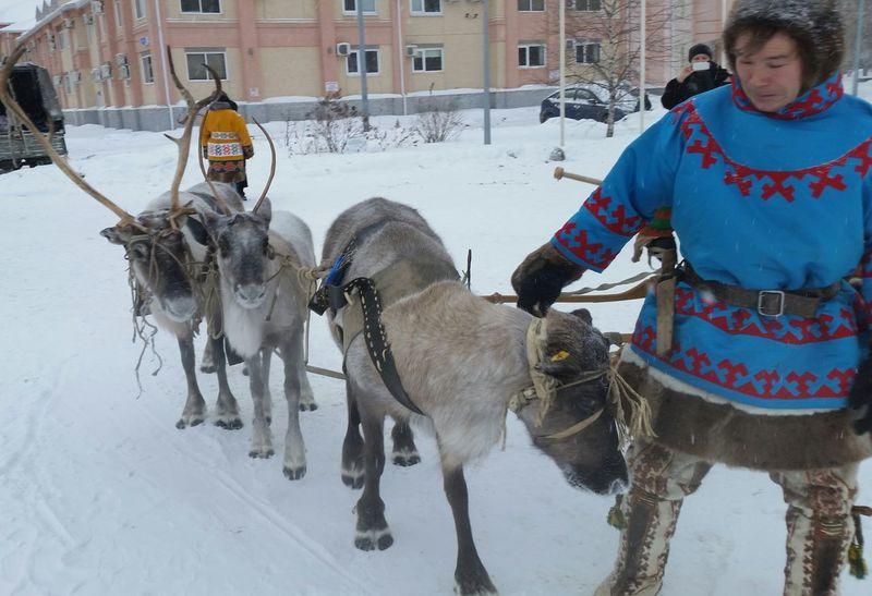 Сегодня утром My Town Siberia North Deer мойгород сибирь олень олени север