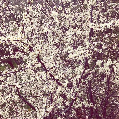 Flowers Flower Spring Spring Flowers Spring2015 Spring Has Arrived Pink Edited Flowers 🌸🌷🌹🌺🌼 🌷 Flowers 🌹
