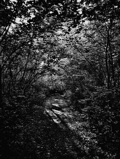 The Great Outdoors - 2016 EyeEm Awards Landscapes With WhiteWall Landscape Landscape_Collection Nature Relaxing Walking Nice Views Sunset Tree Wood No People Contre-jour Week On Eyeem Black And White Black & White