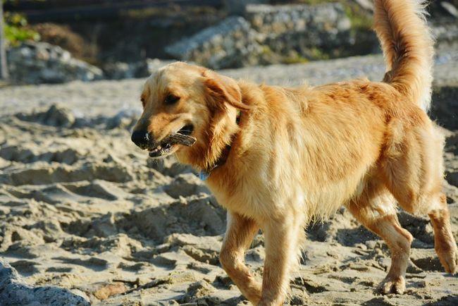 Dog Nikon Good Bestdog  Dog Love Dogslife Dog Walking Dog Life Dog❤