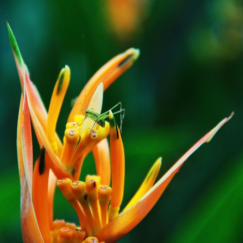 EyeEm Selects Orange Color Animal Wildlife Animals In The Wild Nature Flower Plant Insect Beauty In Nature Close-up One Animal Growth No People Day Animal Themes Fragility Outdoors Day Lily Water Freshness Flower Head