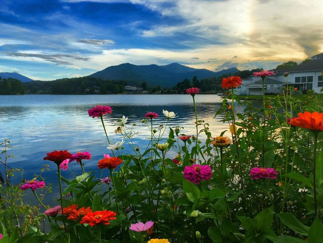 Just enjoying my passion Sunset Flowers Lakelife Lake Junaluska, NC Relaxing Colour Of Life