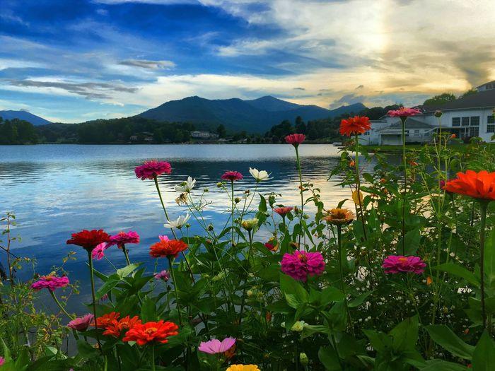 Just enjoying my passion Sunset Flowers Lakelife Lake Junaluska, NC Relaxing Colour Of Life