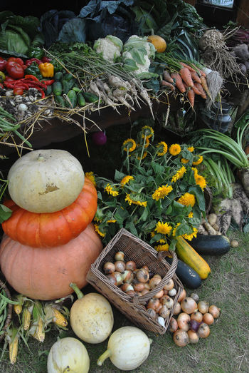 Autumn harvest Agriculture Gardening Harvest Season Pumpkins Vegetarian Food Vitamins Autumn Vegetables Choice Food Food And Drink Fresh Market Freshness Gourd Halloween Healthy Eating Large Group Of Objects No People Outdoors Pumpkin Squash - Vegetable Variation Vegetable Vegetable Stall Vegetable Stand Vegetables