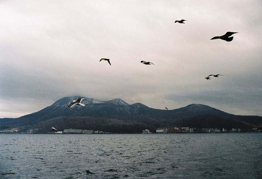 Toyako My Traveling Photography From My Point Of View My Year My View Japan Toyako Flying Mountain Bird Water Animal Themes Mountain Range Nature Beauty In Nature No People Large Group Of Animals EyeEm Best Shots Sky Film Leicacamera Leica M6 Film Photography