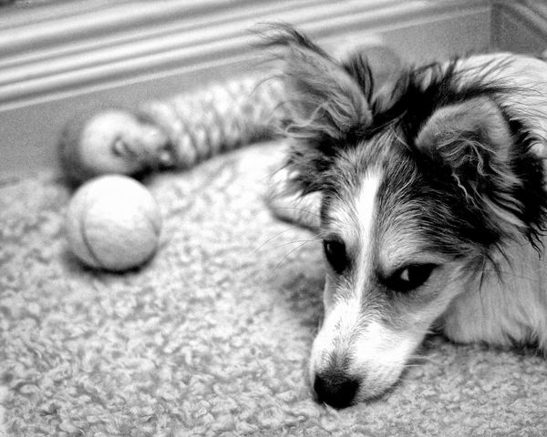 Dettagli... Pronti a giocare... Olympus Visionary Picoftheday Omd-em1 Piccoleprospettive Blackandwhite Doglifestyle Dog Moment EyeEm Dogoftheday