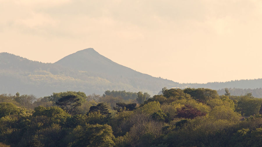 Roseberry Topping Tree Sky Beauty In Nature Scenics - Nature Tranquil Scene Landscape Nature No People Outdoors Evening Roseberry Topping Subtle Colors Distant View Hill Landmark