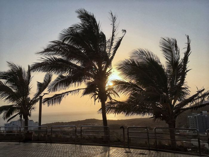 Sun set Dakar Sky Tree Plant Nature Beauty In Nature Growth No People Tranquility Sunset Tranquil Scene Water Scenics - Nature Sunlight Sea Clear Sky Outdoors Land Silhouette Beach