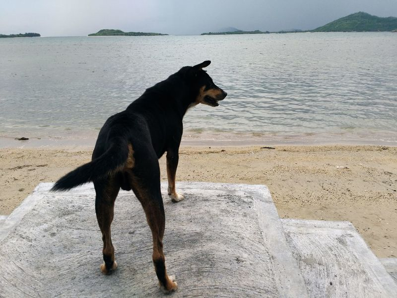 Water Sea Dog Animal Sand Beach Outdoors Mammal Nature One Animal Pets No People Animal Themes Day No Filter No Effects Perspectives On Nature Nature Animal Photography Dogoftheday Dogwalk Dog Portrait Dog Life Doggie