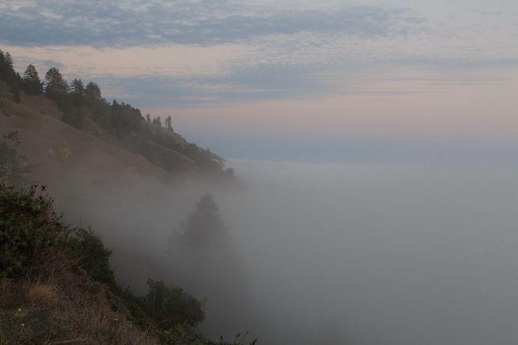 Sonoma Coast. Fog. Sonoma County Coast