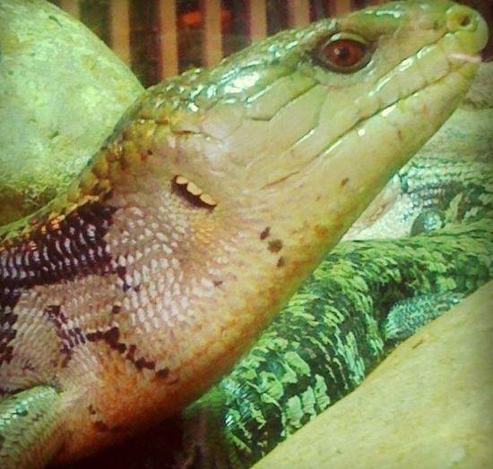 Lizard Cosmocaixa Barcelona Barcelona, Spain