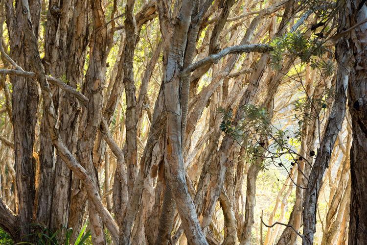Australia Landscape Landscape_Collection Landscapes With WhiteWall