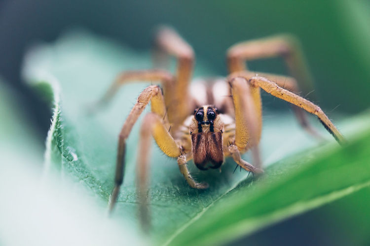 Close-up of spider on green plant