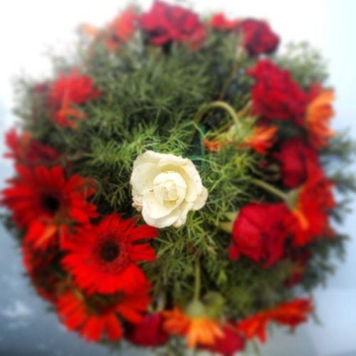 Flowers Rosé White