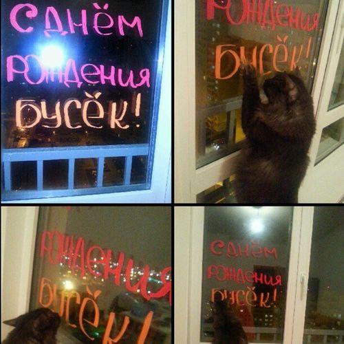 Cat Verybeautiful Like Mylove following nice самыйлучший деньрождения кот мау Буська