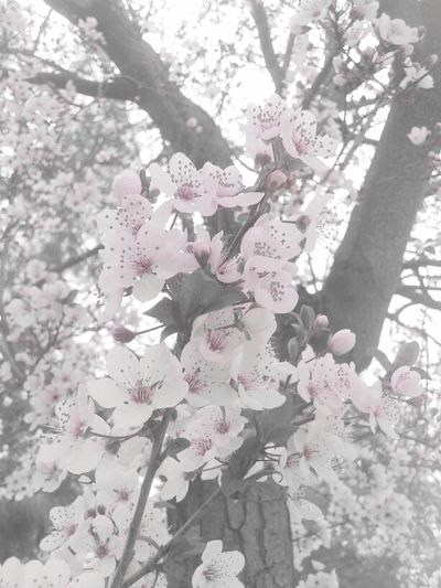 Flowers City Good Morning Color Splash Florecitas