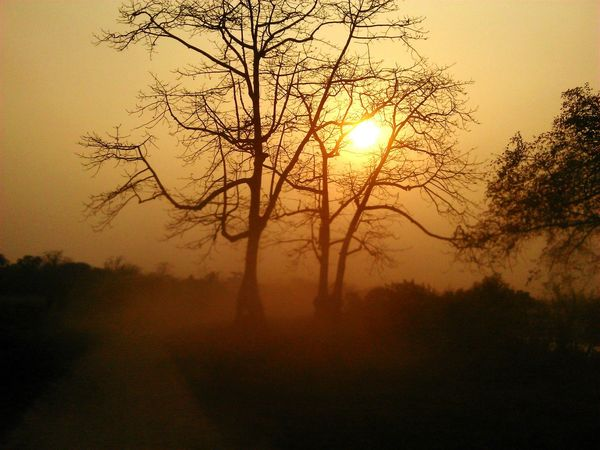 Hello World Nature_collection EyeEm Nature Lover Sunset Silhouettes Jungle Trail The Great Outdoors - 2015 EyeEm Awards Kaziranga