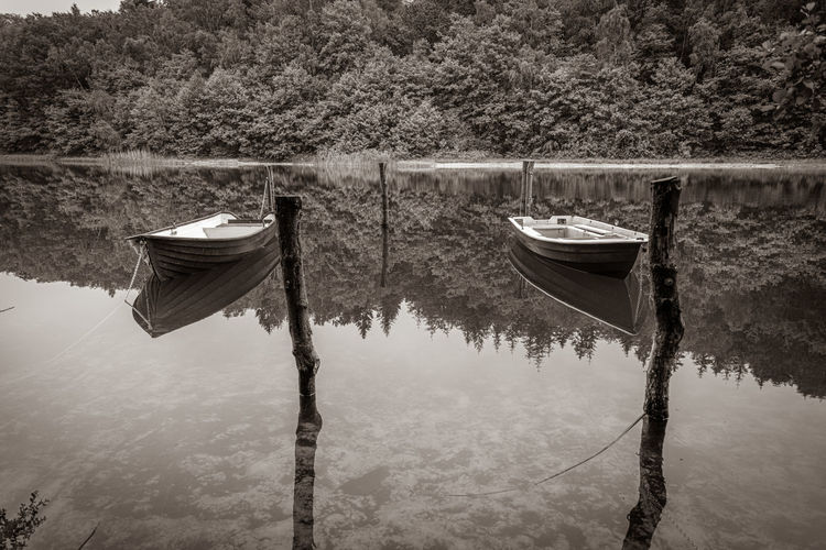 Wooden posts in lake against trees in forest