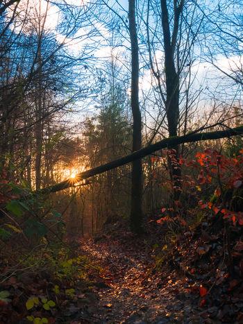 Autumn Popular Photos Photography Beautiful Sunshine Sunset Landscape Nature Trees Panasonic Lx100