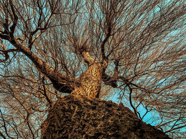 IPhoneography Bare Tree Tree Low Angle View Branch Nature Sky Outdoors Day Clear Sky No People Blue Beauty In Nature Close-up
