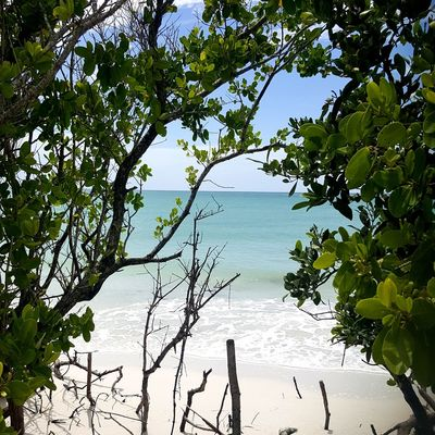 In an Island called Beer... No beer for me deer... Dreamy Heaven Paradise Beach Beach Beachphotography Behind The Veils Behindthescene Secretspots No People White Sand Beach Blue Water Warm Water