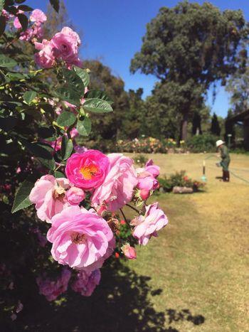 Flowerporn Flowers Gardening