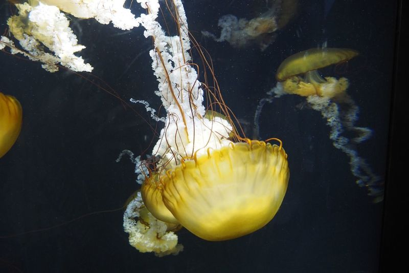 Close-up of jellyfish in sea