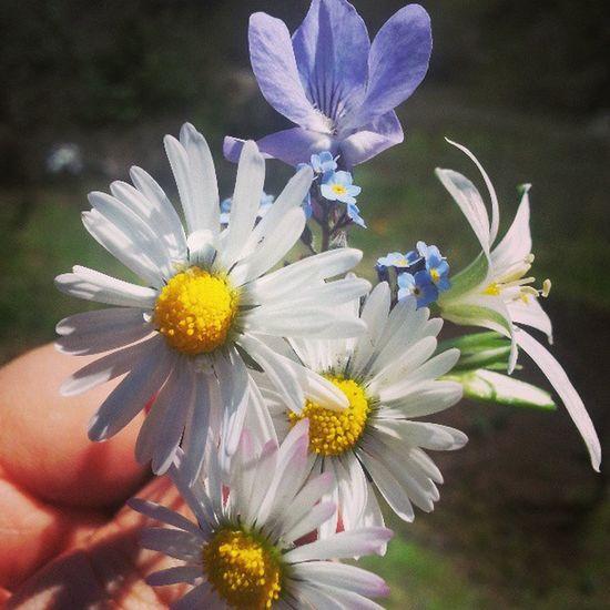 Flowers Spring Camomille Trabzon besikduzu instamood instagram instahub instagood instamood igers jj jj_forum igersturkey instafun instalove moody