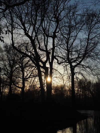 Tree Silhouette Bare Tree Sun Beauty In Nature Nature Tranquility Sunset Branch Water Outdoors Scenics Sunlight No People Day Sky