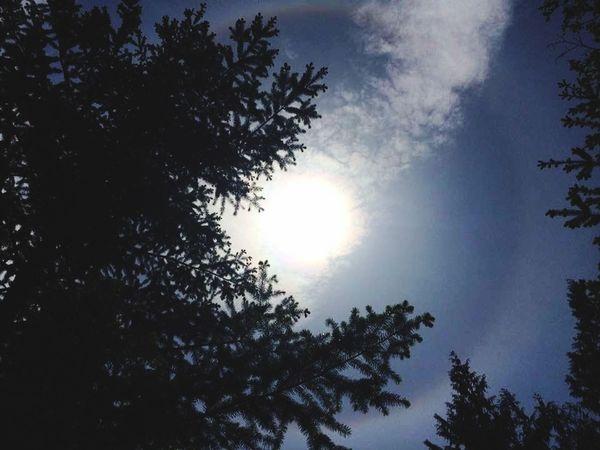 Filter 2. Tree Forest Sunset Tree Area Silhouette Sky The Still Life Photographer - 2018 EyeEm Awards EyeEmNewHere