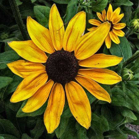 Flower Hdr Edit Plant Flower Head HDR Nature Plants And Flowers EyeEm Best Shots - Nature Jopesfotos - Nature