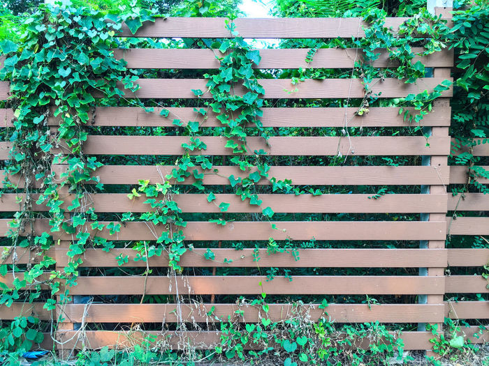 Plants on wooden fence in garden Green Color Nature Pattern, Texture, Shape And Form Patterns In Nature Abstract Background Beauty In Nature Climbing Cover Creeper Plant Fence Garden Geeen Green Color Growth Leaf Leaves Lvygourd Nature Outdoors Pattern Plant Rough Stained Wood - Material